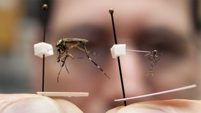 The Attack of the Gallinippers: Not Your Average Mosquito